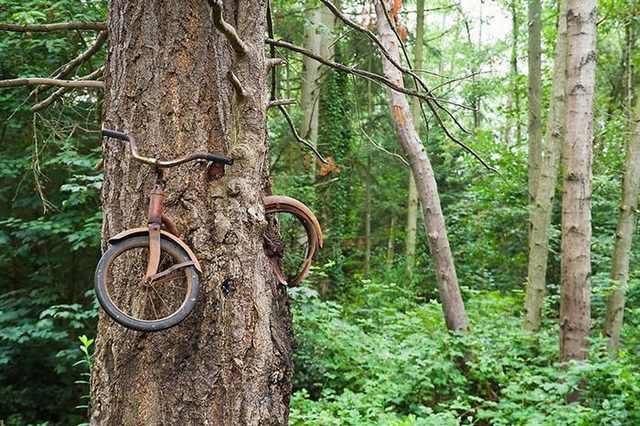 Nature Winning