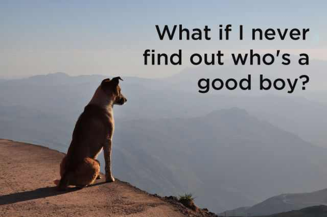 dog thoughts funny