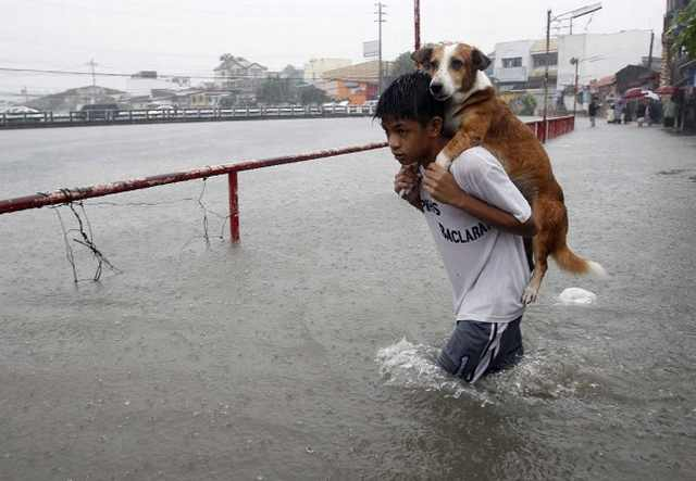 humans saving animals
