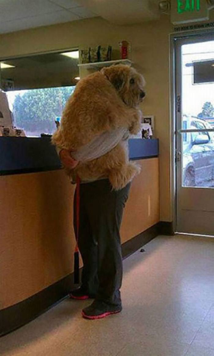 23 Gigantic Dogs You Can't Help But Love
