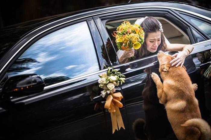 25 Award Winning Wedding Photographs of 2014