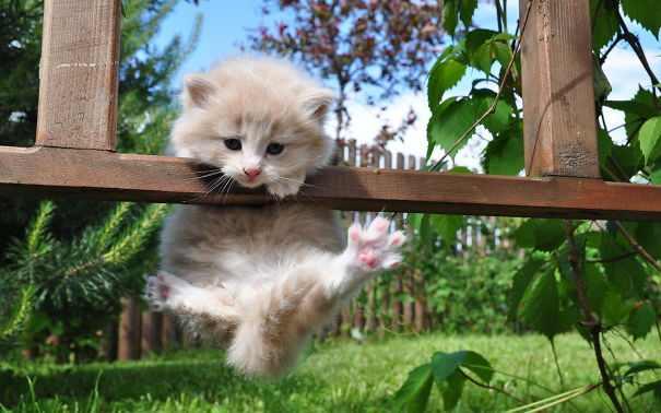 ninja cats photos