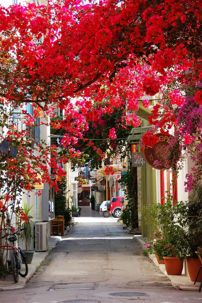 flowery streets