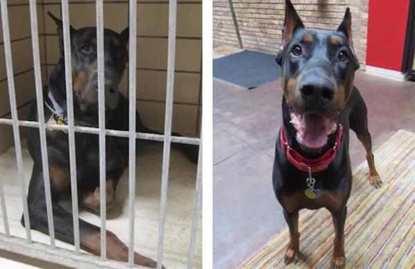 Before And After Adoption Of Dogs Baba Recommends BabaMail - 27 amazing transformations of dogs and cats before after adoption