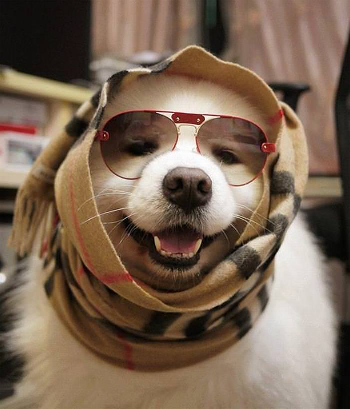Say Cheese: 30 Dogs Taking Happy Selfies
