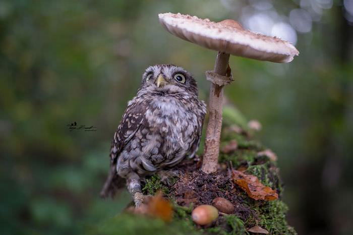 the most adorable palm sized owl cute overload babamail