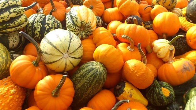 Healthy Fall Foods