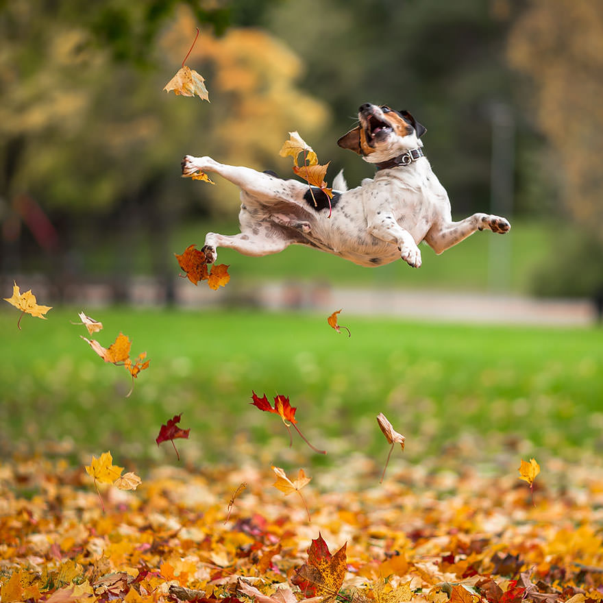 Animals: 31 Animals That Simply Love The Autumn