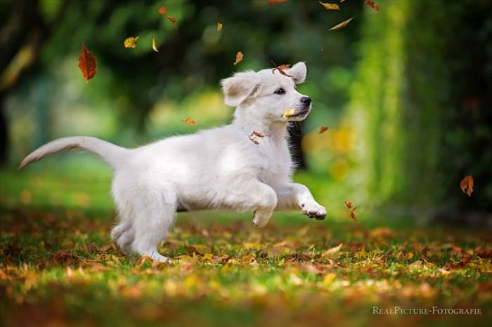 animales en otoño