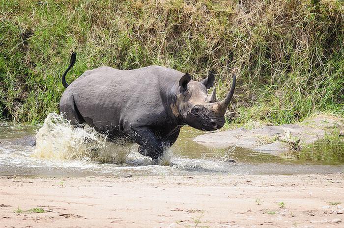 非洲肯尼亚的野生动物世界