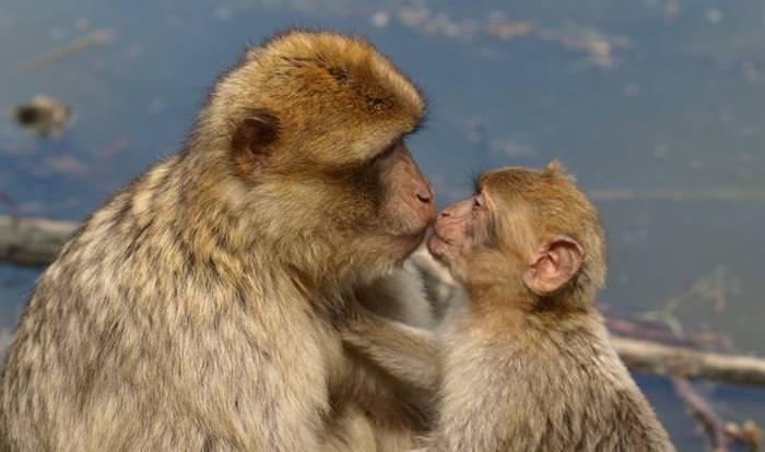 Curiosos hechos sobre besos