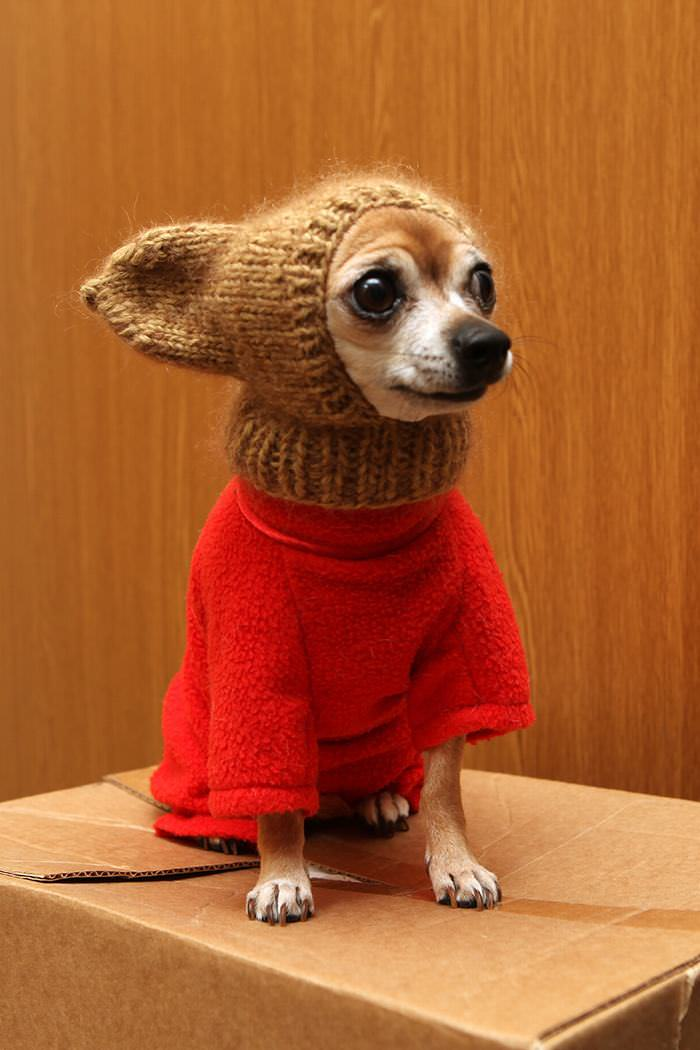 These Adorable Pets Are 100% Ready for Winter - Are You?