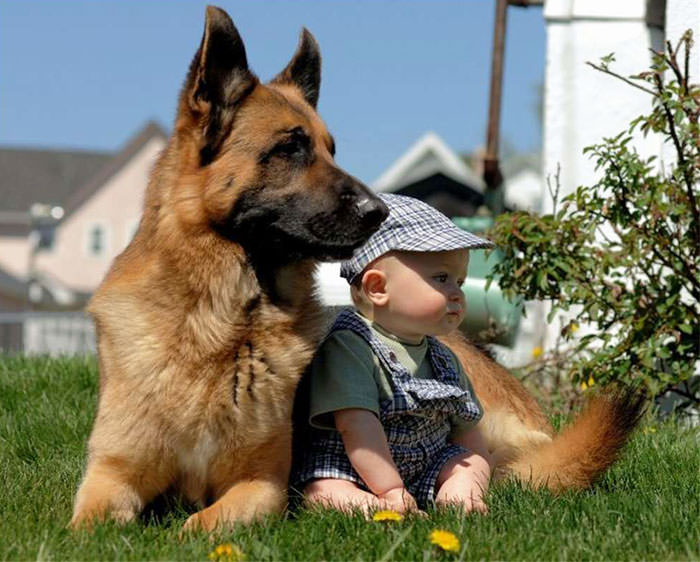 kids and<br>                                  pets