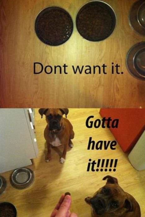 Only dog owners will understand