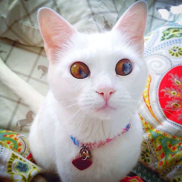 animals with multi colored eyes
