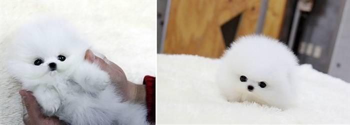 Most Inspiring Japanese Chubby Adorable Dog - 598a48f6-82f2-4c65-b232-813ebdec559c  Trends_714013  .jpg