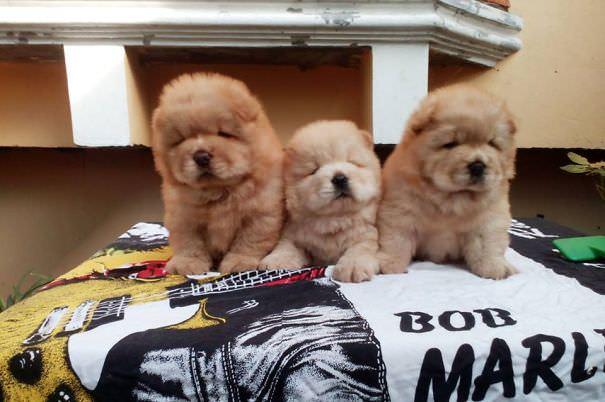 Good Rare Chubby Adorable Dog - 78470528-ab1e-4448-b2bf-e5cc0d254e96  Pictures_38533  .jpg