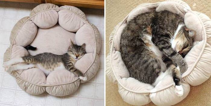 cats before and after