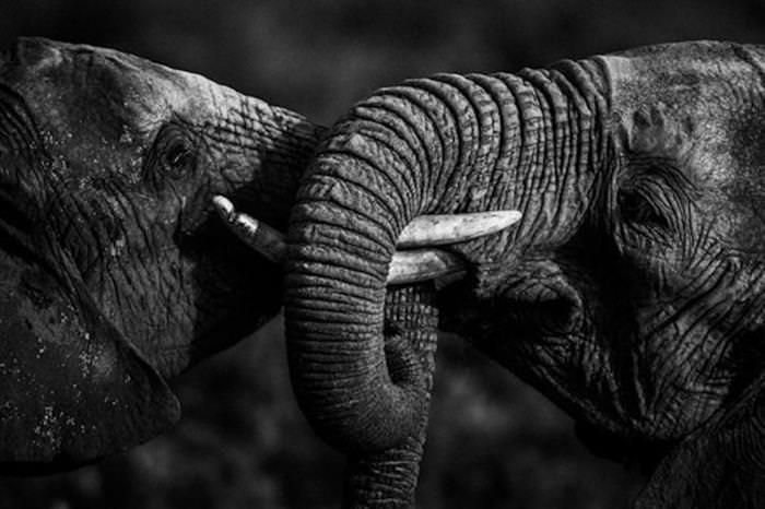 Dramatic animals