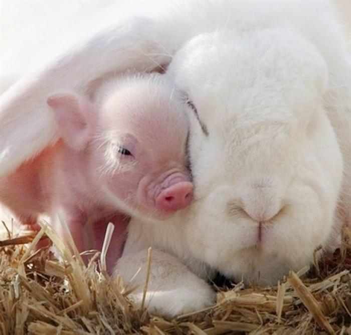 animals co-sleeping