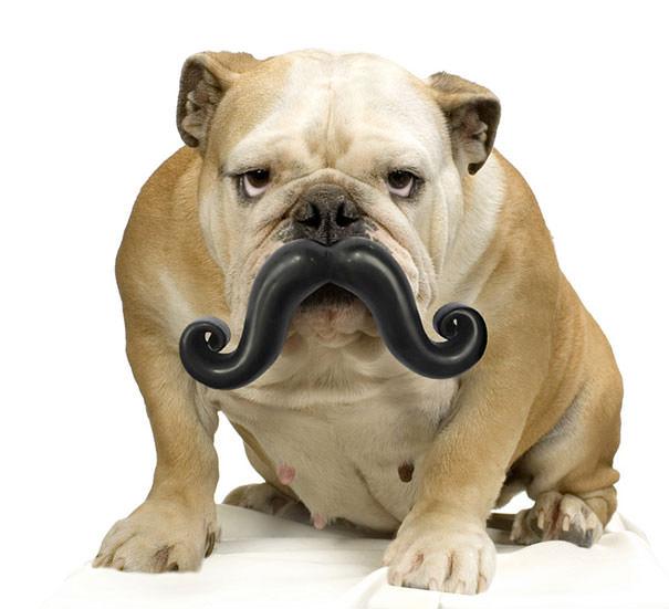 Hilarious dog photos