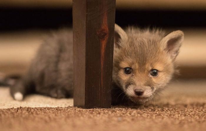 Dog&Fox
