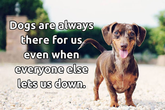 Tribute to Dogs