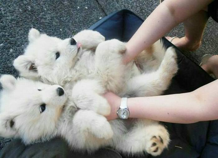 Belly rub animals