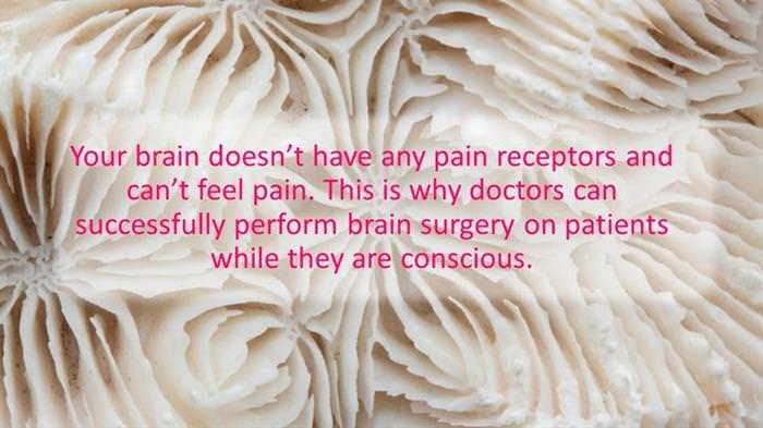 13 Brain facts