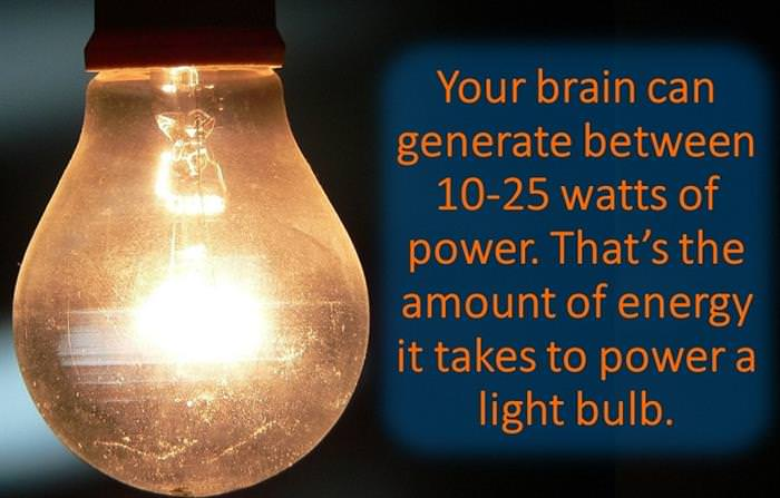 13 Brain facts