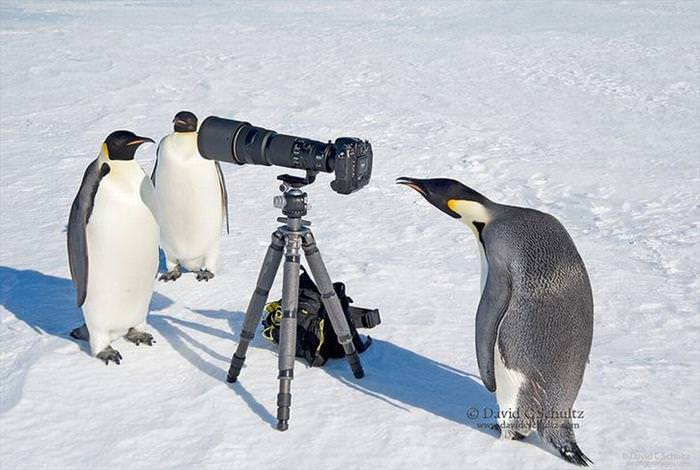 animal photographers