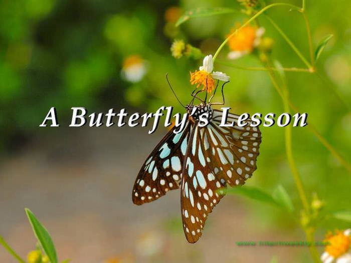 butterfly inspiring story