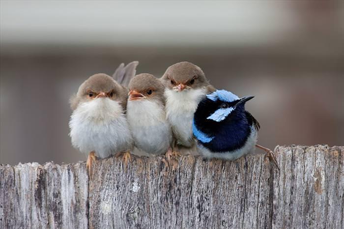 Bird huddles