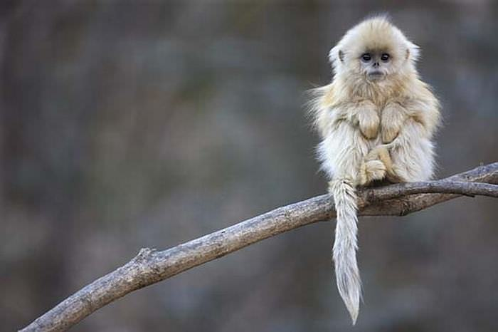 Image of: Know Exist Beautiful And Unusual Endangered Animals Babamail 18 Unusual Endangered Animals Nature Babamail