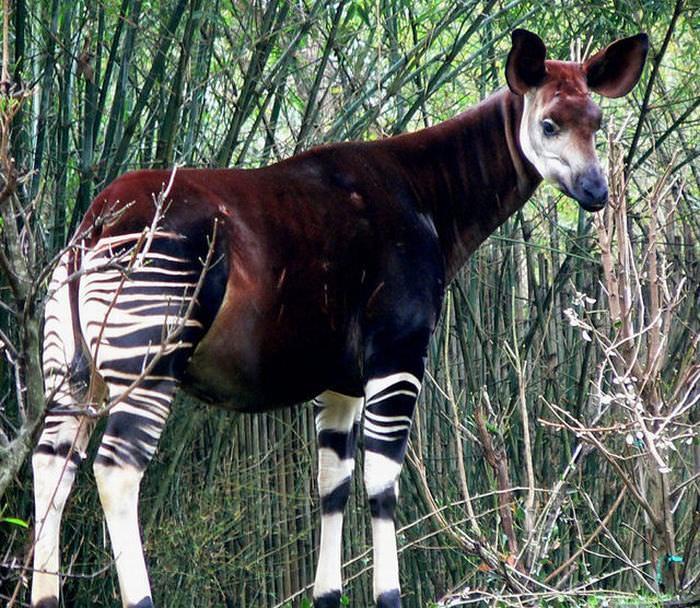 Image of: Extinct Beautiful And Unusual Endangered Animals Babamail 18 Unusual Endangered Animals Nature Babamail