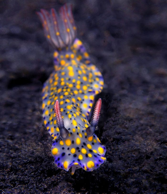 sea slugs alien lifeform