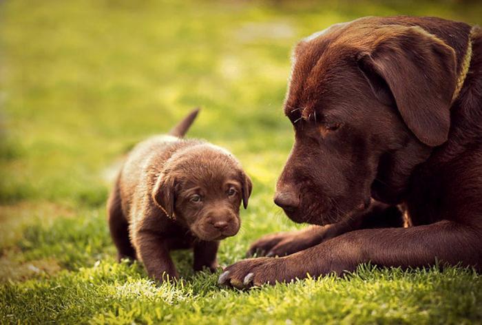 mini me dogs