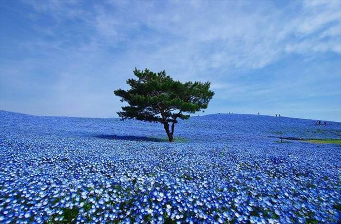 Nature Looks Brilliant in Blue