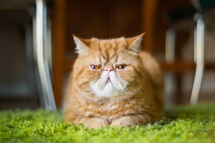 cat emotions