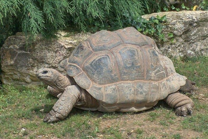 Slow Animals