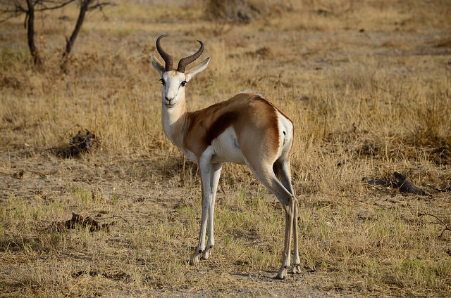 10 Cutest Animals of the Desert