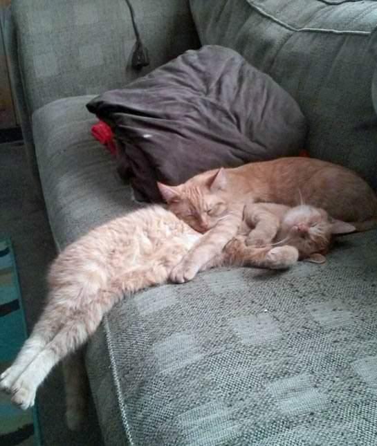 Pets Sleeping