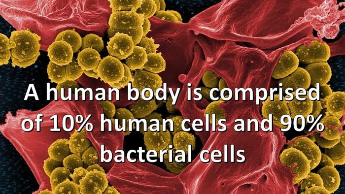 the 20 little known facts about the human body Explore one of nature's most amazing machines with these interesting human body facts read more 4 asia read more 80 interesting facts about south korea.