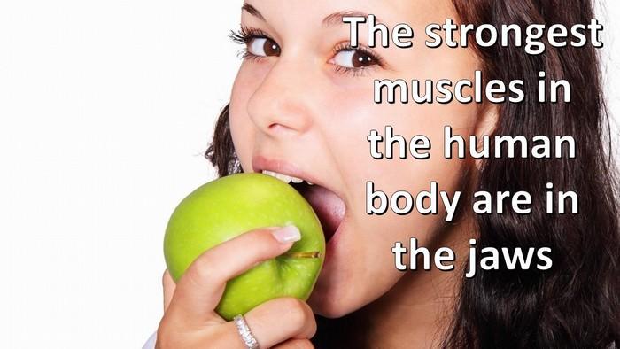 Amazing body facts