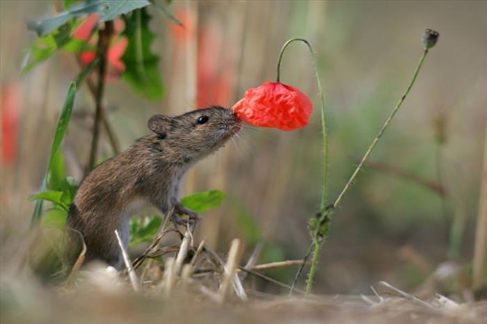 CUTENESS OVERLOAD ALERT: Animals Enjoying Flowers!_ImageBox