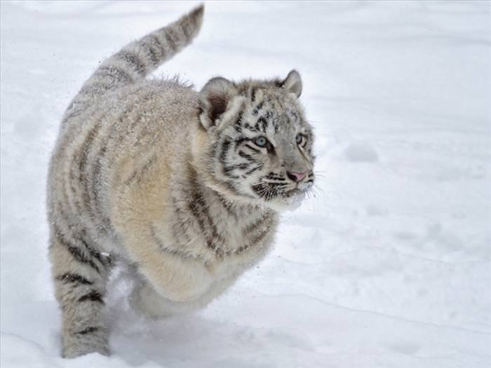 winter animal photos