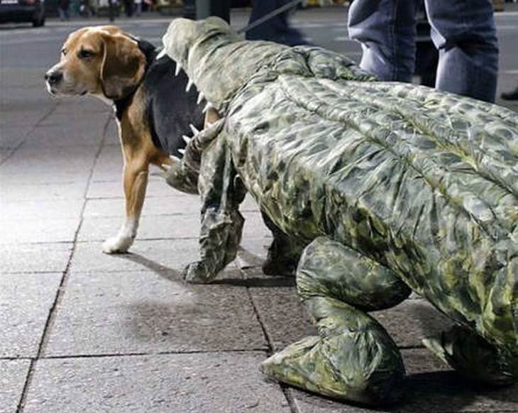 Must see Boo Army Adorable Dog - ddc96178-0480-448d-9de6-1e715c2a70cf  Perfect Image Reference_104270  .jpg