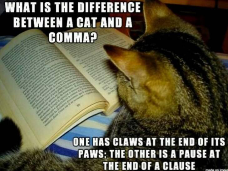 grammar, funny