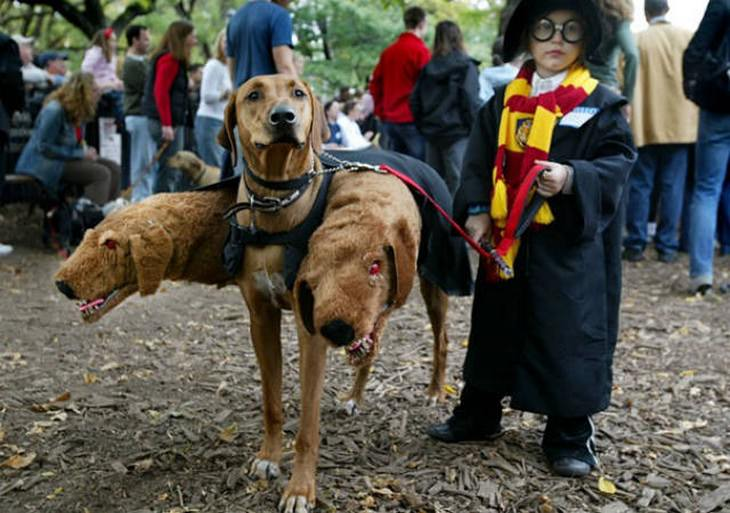 dogs, funny, cute, Halloween