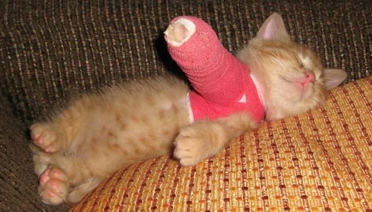 animals, injured, casts